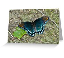 Butterfly on Path Greeting Card