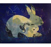 Printmaking: Rabbit Photographic Print