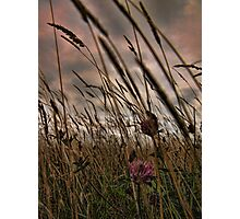 wind in the grass Photographic Print