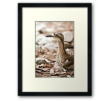 Invisible Curlew Framed Print