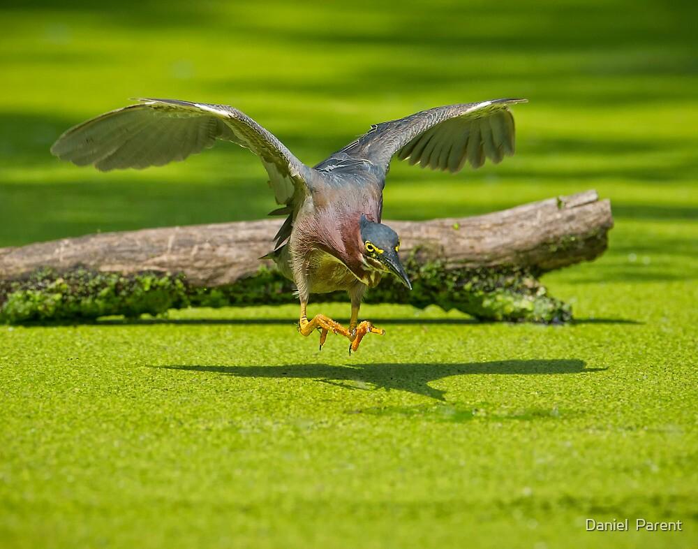 Aerial Assault by Daniel  Parent