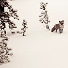 Colorado Fox by robyngourley