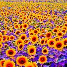 Purple field of sunflowers by browncardinal8