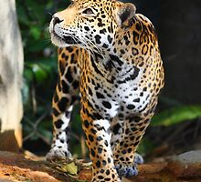 On the Prowl by Mike Miller