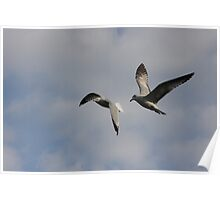 Free Gulls Poster