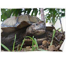 Tortoise needs a tissue Poster