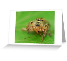 excellent hunter but...  Greeting Card