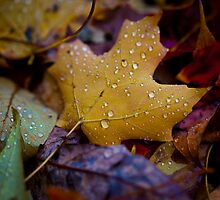Wet Fall Leaves by John Hanam