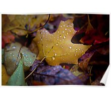 Wet Fall Leaves Poster
