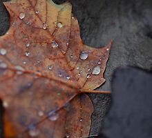 Wet Fall Leaf on Stone by John Hanam