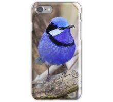 Splendid fairy Wren, Perth Western Australia iPhone Case/Skin