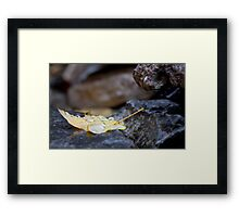 Weighed Down Framed Print