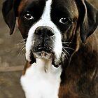 Arwen's Portrait -Boxer Dogs Series- by Evita