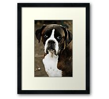 Arwen's Portrait -Boxer Dogs Series- Framed Print