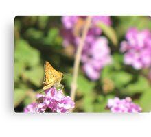 Butterfly ~ Fiery Skipper (Grass Skipper, Skipperling) Canvas Print