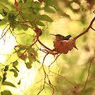 Nesting II by jbiller