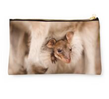 Little Wallaby Joey in mums pouch Studio Pouch