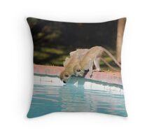 Vervet monkeys Throw Pillow