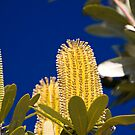 The Banksia by Philip Alexander