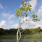 Graceful and delicate, a nice little tree by Ann Reece