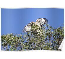 Red Tail Flash of White Poster