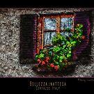 Window Box by RAINY CHASTINE