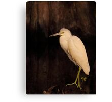 Heron of the Cypress Swamp Canvas Print