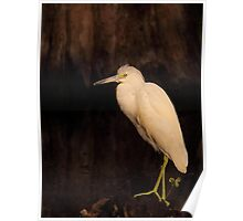 Heron of the Cypress Swamp Poster