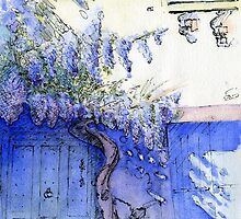 Wisteria, Lagrasse, South of France by reddogcards