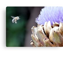 Pollen covered bee with artichoke flower Canvas Print