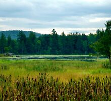 Hillsborough Marshland by Monica M. Scanlan