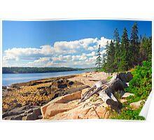 Driftwood, Acadia National Park, Schoodic Peninsula, Maine, United States Poster