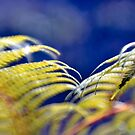 Tree fern by Chris Samuel