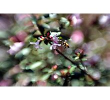 Bee Line Photographic Print