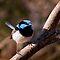Vacation Destinations: Flora and Fauna of Australia  & New Zealand - close-up