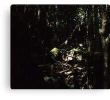 the elder forest Canvas Print