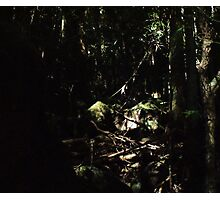 the elder forest Photographic Print