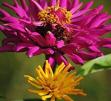 Zinnia Flowers by Jonice