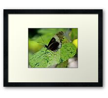 Tough Life -Wing says it all! Framed Print