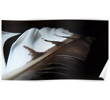 Red Hawk Tail Feather Poster