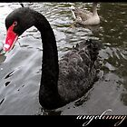 Black Beauty - A Black Swan by angelimagine