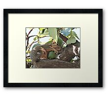 Eating Healthy Framed Print
