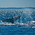Humpback Whale Tail by Jaxybelle