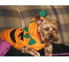 Biscuits Halloween Costume Photographic Print