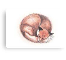 Fox Sleeping Canvas Print