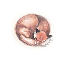 Fox Sleeping Photographic Print