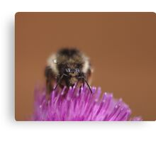 Big bumble Canvas Print
