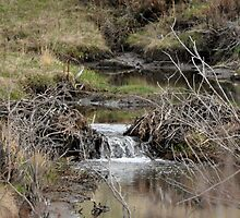 creek waterfall by worretphoto
