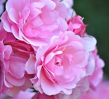 Pretty Pink Petals by Dorothy Thomson