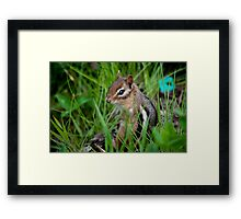 Furry neighbour Framed Print